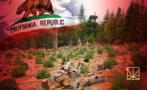 La Marihuana legal paisaje en California está evolucionandorápidamente