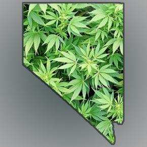 Nevada Oficial de Salud predice que el número de pacientes de Marihuana Medicinal prontocuadruplicará