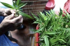 Presentarán un proyecto para despenalizar el cannabis para usomedicinal