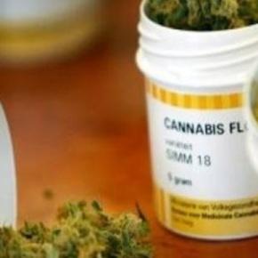 Se incorporaría cannabis como medicina si se demuestran propiedades: Mondragón yKalb