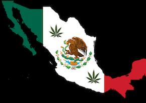 Legalización de la marihuana: Malo para los carteles, mejor paratodos